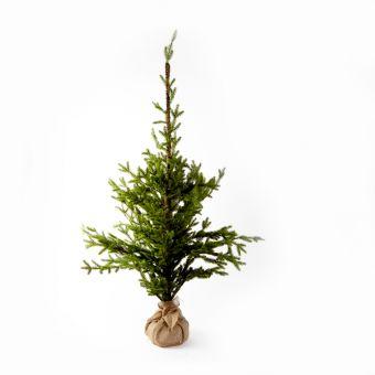 Alpine Tree - 150cm
