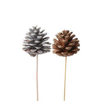Pine Cones on Stem (Pack of 10)