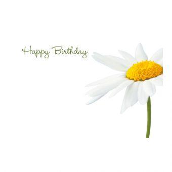 Happy Birthday White Daisy