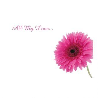 All My Love Bright Pink Gerbera