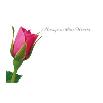 Always In Our Hearts Pink Rosebud