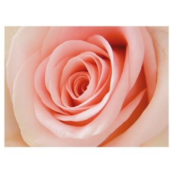 Pink Rose - Folded