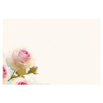 White & Pink Rose on Cream Background