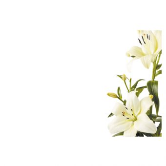 White & Green Lilies