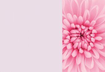 Pink Chrysanthemum Classic Plain Card