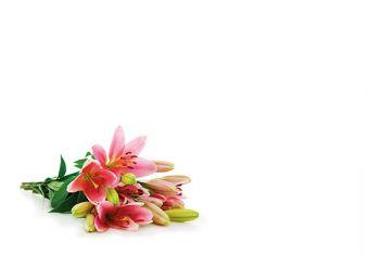 Pink & Green Lilies Classic Plain Card