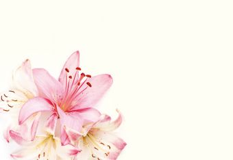 Pale Pink & Ivory Lillies Classic Plain Card