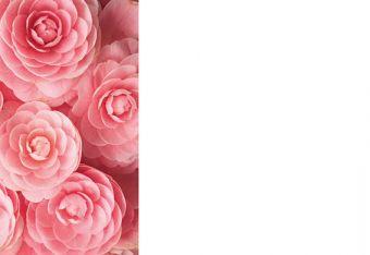 Pink Dahlia Strip Classic Plain Card