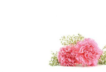 Pink Carnation & Gypsophila Classic Plain Card