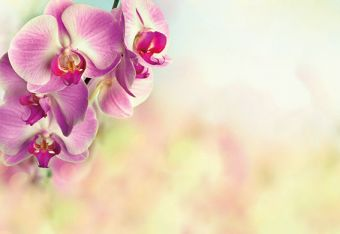 Pink Orchid Classic Plain Card