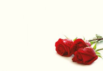 Three Red Roses Classic Plain Card