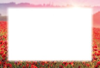Poppy Border Classic Plain Card