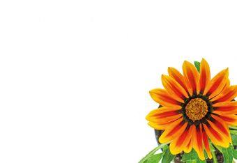 Orange Gerbera Daisy Classic Plain Card