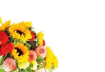 Sunflower & Allium Mixture Classic Plain Card