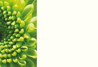 Green Chrysanthemum Classic Plain Card