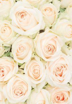 Ivory & Green Roses Folded Plain Card
