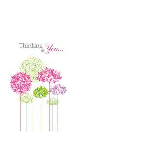 Thinking Of You - Multi-Coloured Hydrangeas