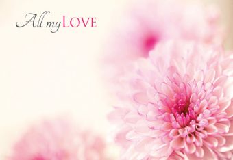 All My Love - Two Tone Chrysanthemum Classic Worded Card