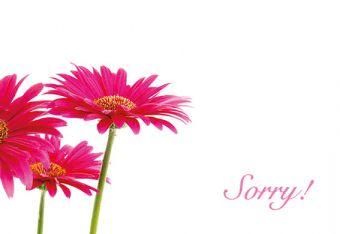 Sorry - Cerise Gerberas Classic Worded Card