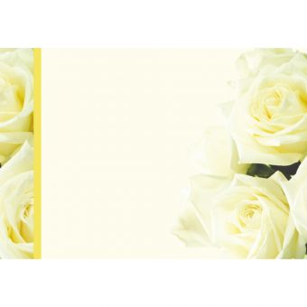 Plain Ivory Roses