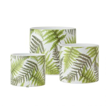 Ferns Cylinder Ceramic Pot