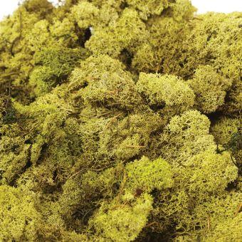 Finland Moss