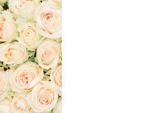 Ivory & Green Roses Classic Plain Card