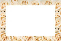 Cream Rose Border Classic Plain Card