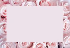 Pink Rose Border Classic Plain Card