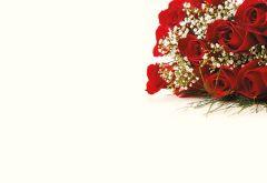Dozen Red Roses & Gypsophila Classic Plain Card