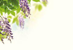 Purple Hanging Flowers Classic Plain Card