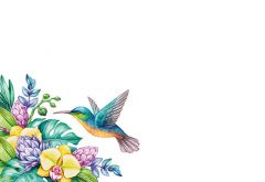 Hummingbird Floral Classic Plain Card