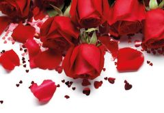 Red Roses & Petals Folded Plain Card
