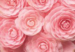 Pink Dahlia Floral Folded Plain Card