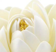 Ivory Lotus Folded Plain Card