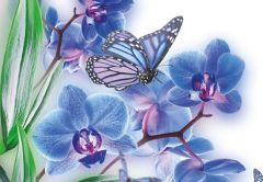 Blue Orchid & Butterfly Folded Plain Card