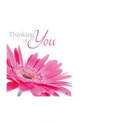 Thinking of You, Pink Gerbera