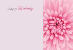 Happy Birthday - Pink Chrysanthemum Classic Worded Card