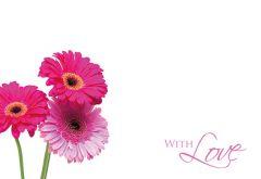 With Love Gerbera - Pink Gerberas Classic Worded Card