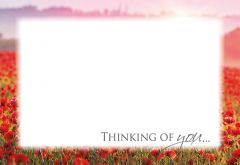 Thinking of You - Field of Poppies Classic Worded Card