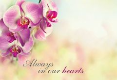 Always in our Hearts - Pink Orchid Remembrance Card