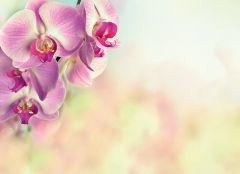 Pink Orchid Large Remembrance Card
